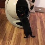 Unboxing the Litter Robot: I'm Ready for the Robocalypse